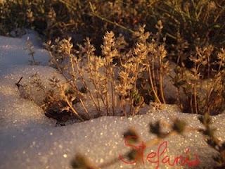 Entre la nieve....
