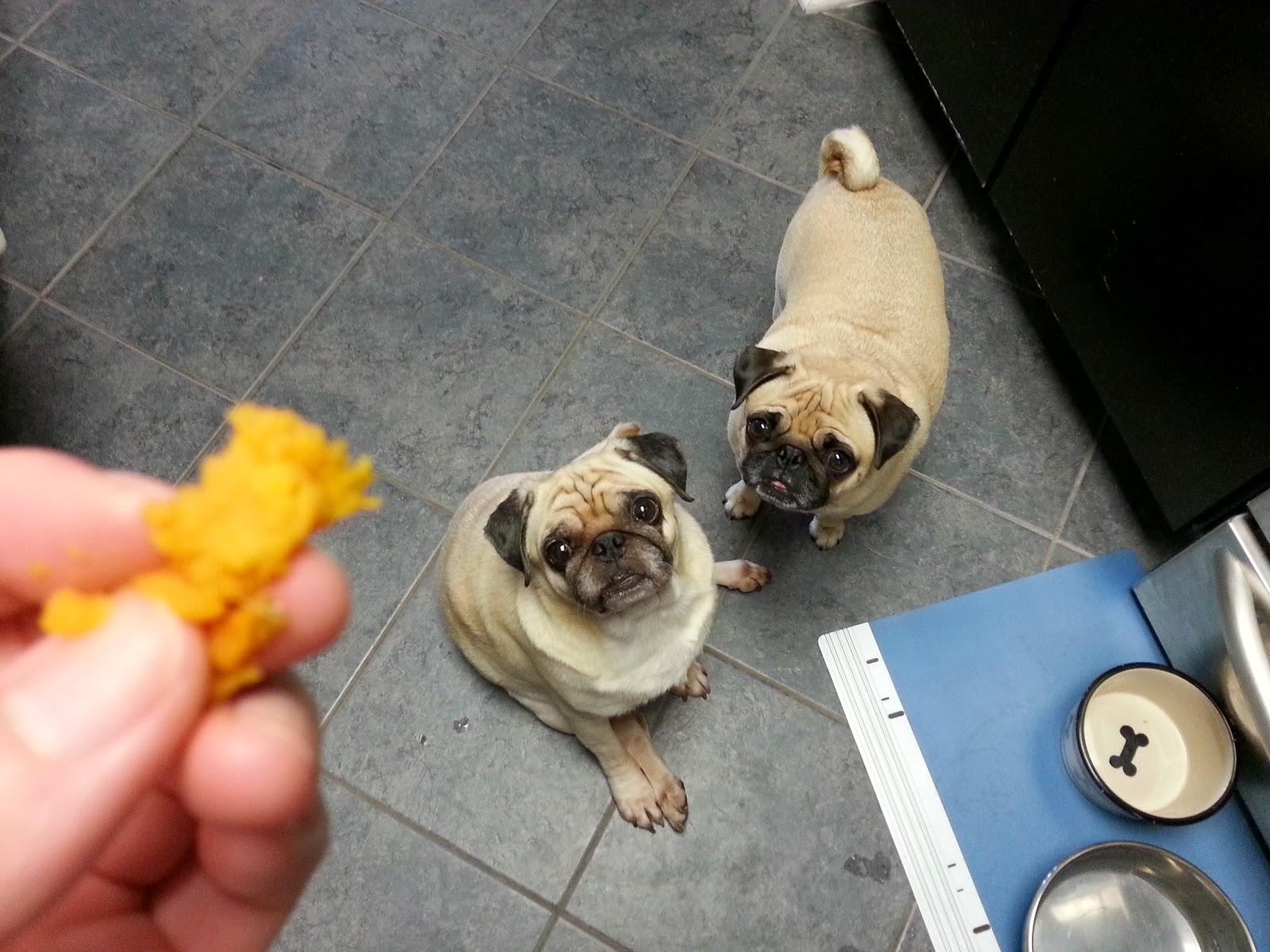 ... teeny bit of sweet potato! Sweet potatoes for my sweet pugtatoes