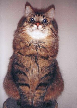 funny cat names. Siberian Cat Names