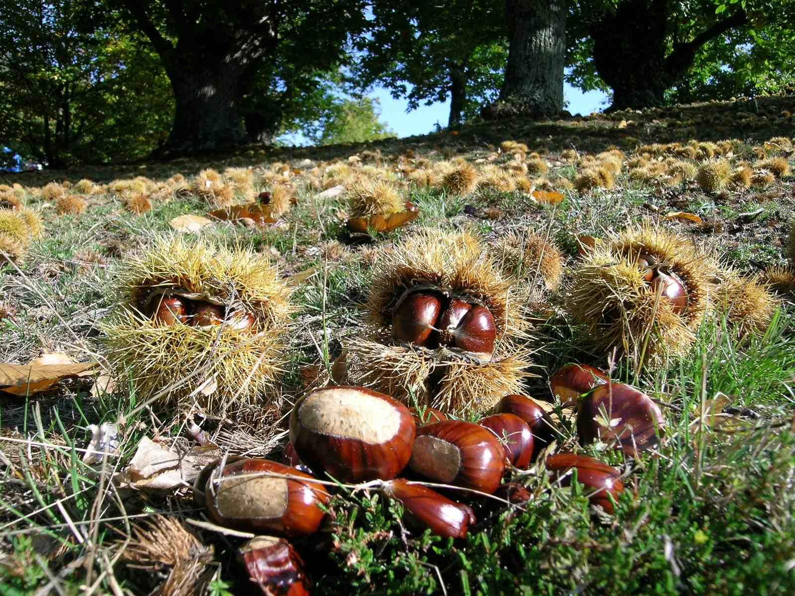 Io amo firenze sagre mercatini e mostre di ottobre la for Mercatini toscana