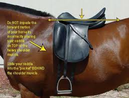 Royal grove stables blog saddle fitting how to fit an english requirements to fit a saddle correctly ccuart Choice Image