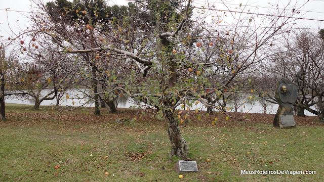 Primeira árvore de maçã fuji plantada no Brasil