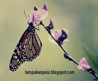 Puisi kupu kupu
