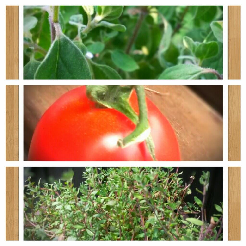 Oregano Tomate Thymian