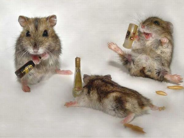 Drunk Animals Seen On www.coolpicturegallery.us