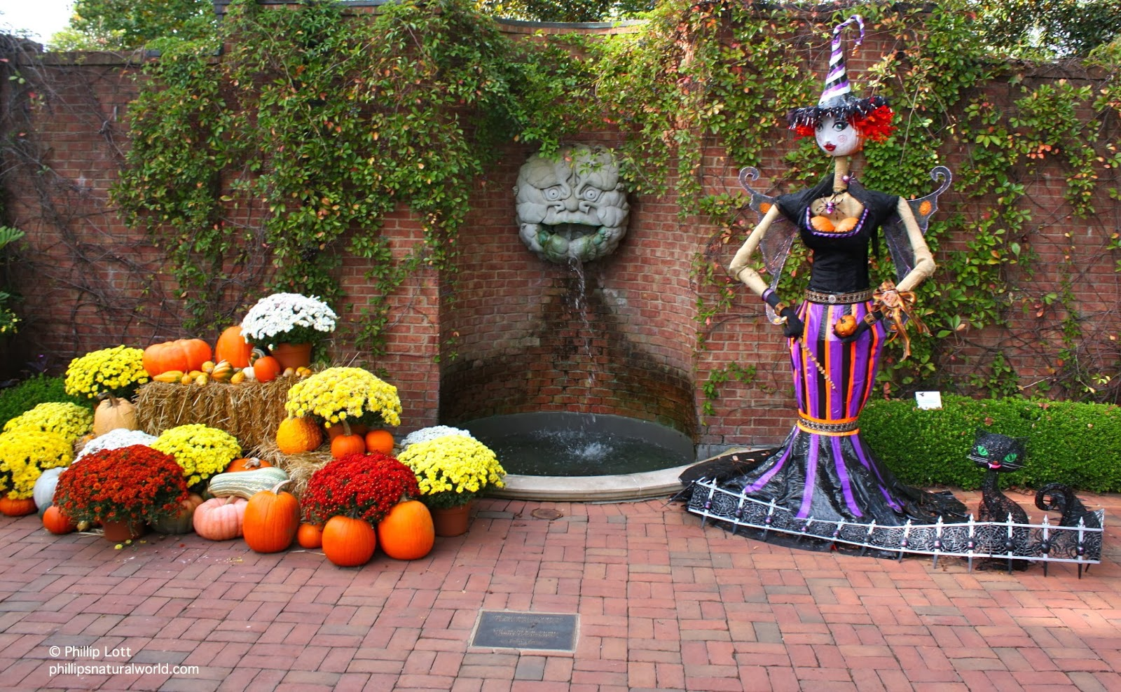 Halloween in the Atlanta Botanical Gardens | Phillip\'s Natural World