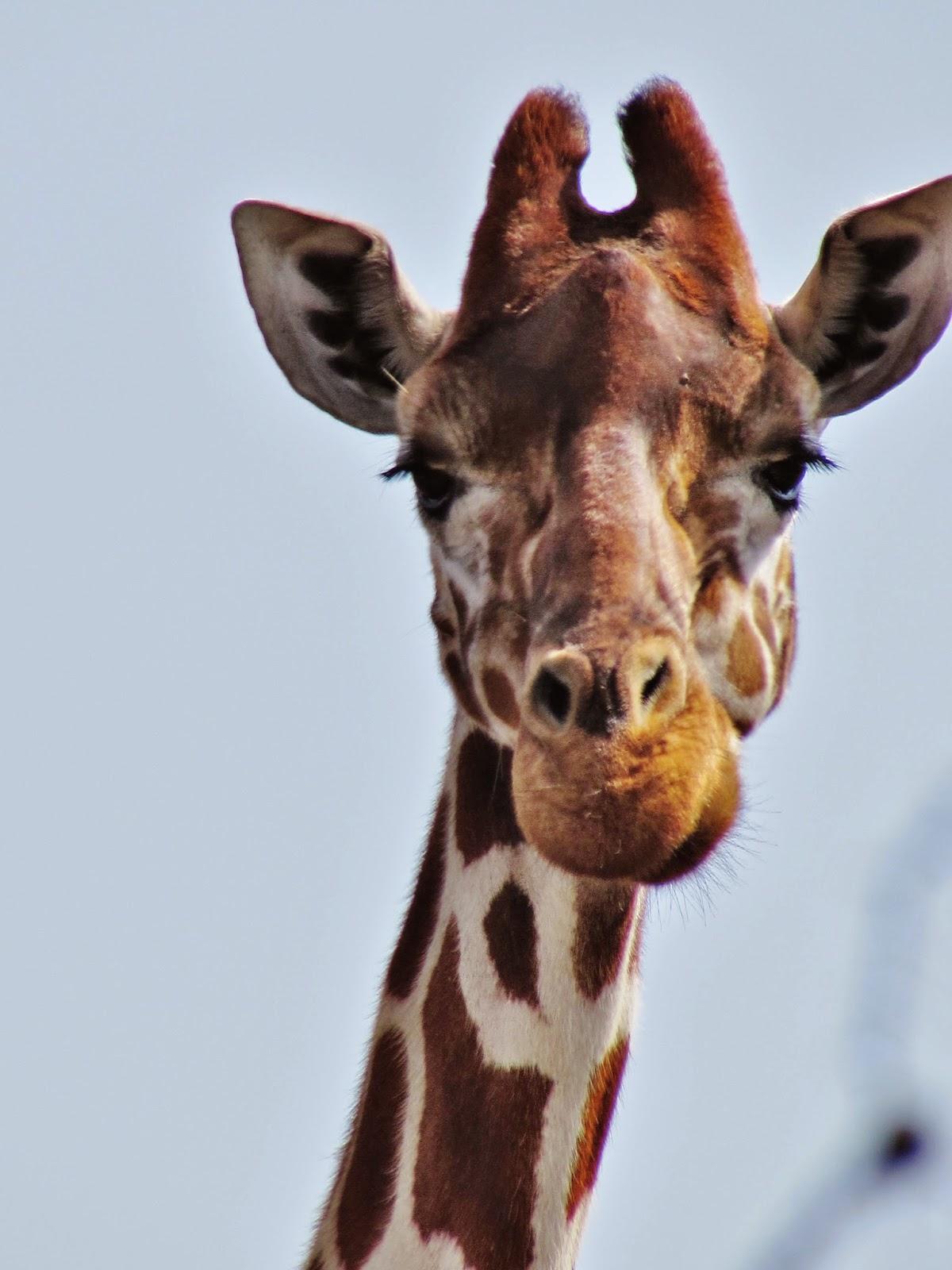 ol pejeta conservancy the art of animal spotting bernie u0027s