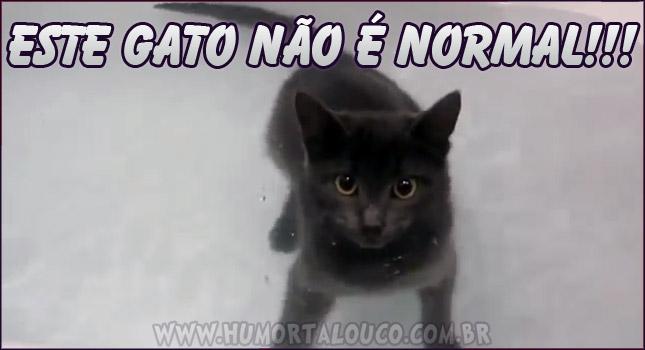 este-gato-nadando-nao-e-normal