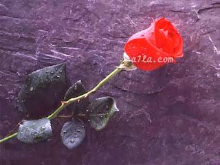 حالات الموت التى سجلت كأغرب حالات فى التاريخ البشرى  - وردة مقبرة الوفاة فراق الاحبة زهرة