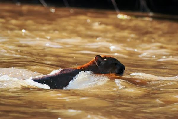 Pantanal Nature -  The life in the Pantanal - Bios