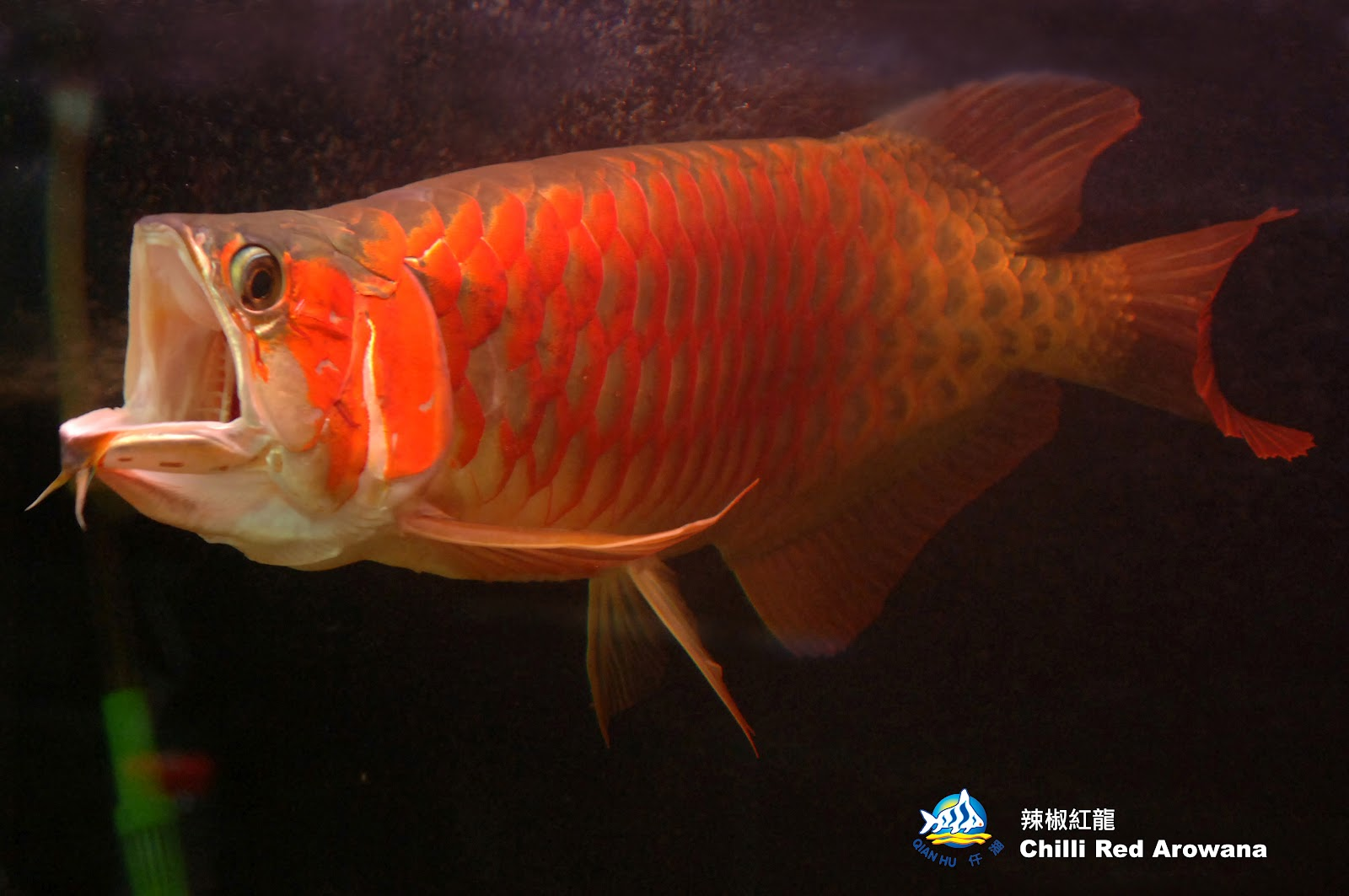 boy ass tube
