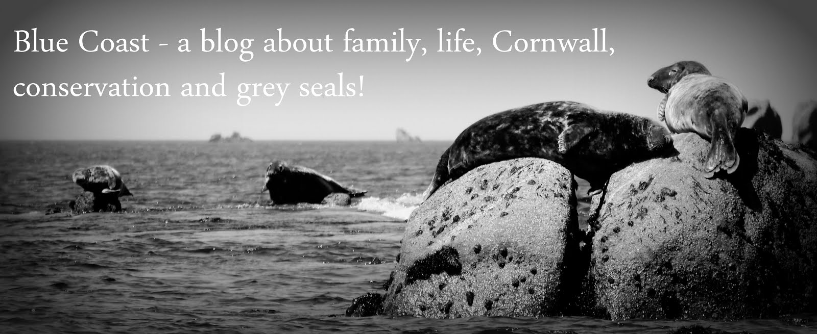 Blue Coast - a blog about family, life, Cornwall, conservation and grey seals!