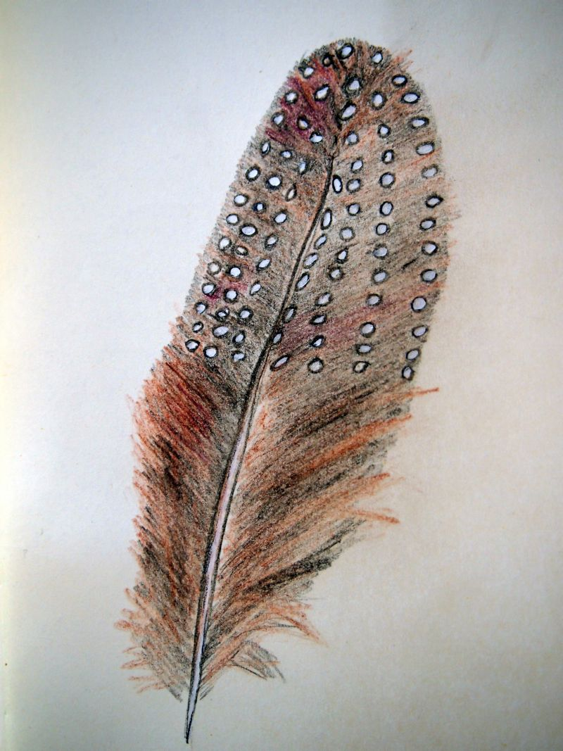 feather falls gay personals Find great deals on ebay for feather falls shop with confidence.