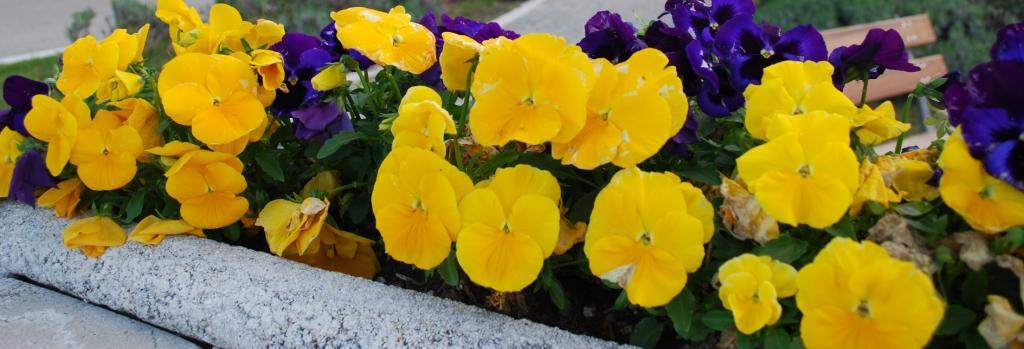 Il blog di aprile 2012 for Trasforma un semplice terreno in un colorato giardino