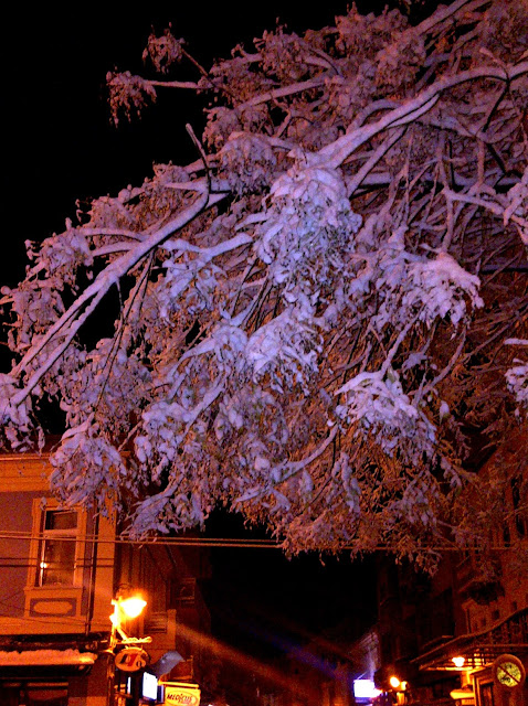 Snow covered tree on Shirok Sokak