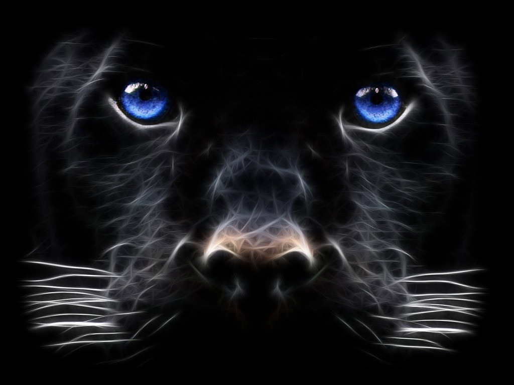 http://4.bp.blogspot.com/-rjWD8XgTvs0/UMiSCWyhAKI/AAAAAAAABM8/FXdwBVIRsfo/s1600/Backgrounds-Windows-7-Black-Panther-Big-cat-Desktop-Wallpaper-1024x768.jpg