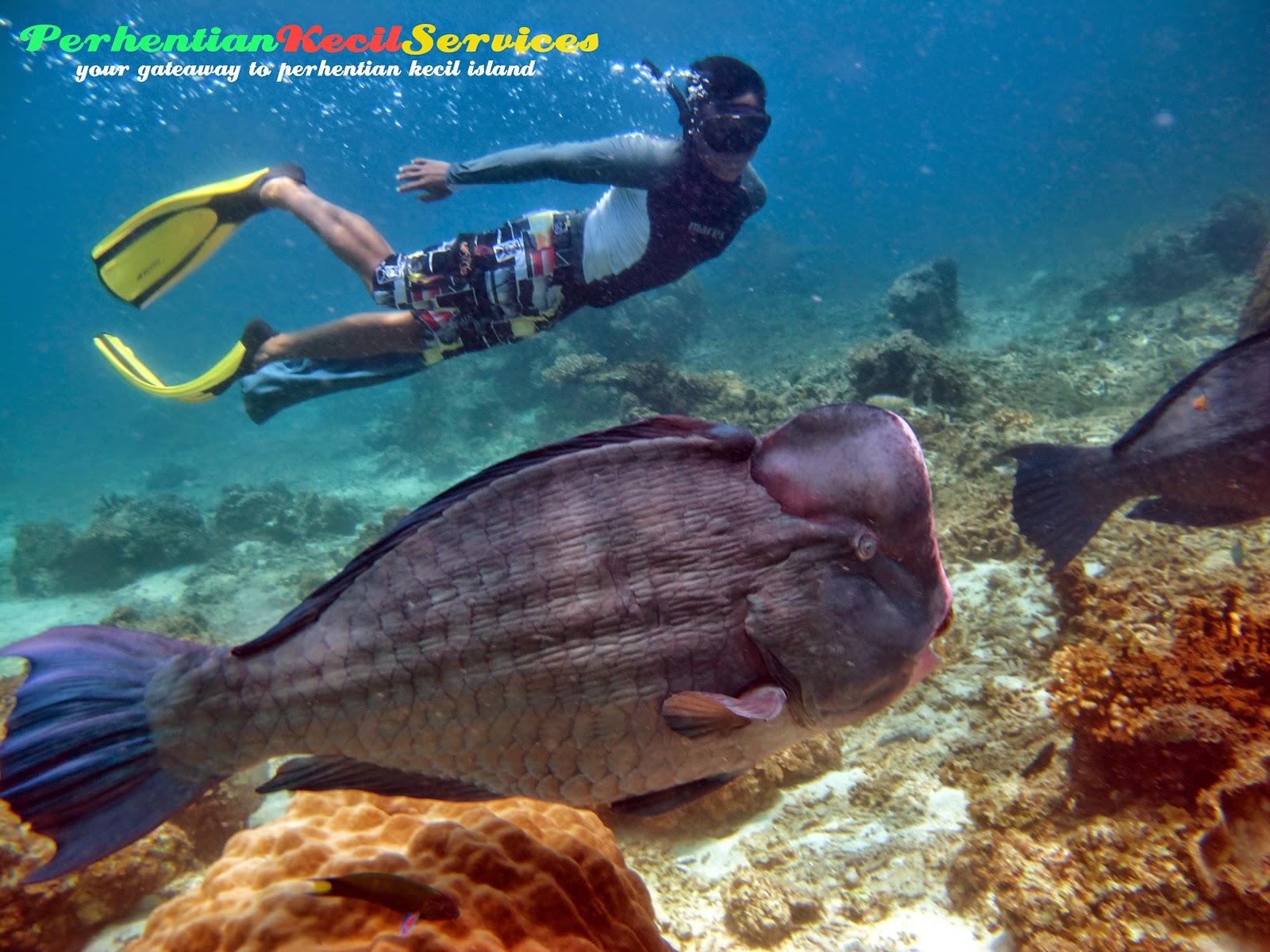 Pakej snorkeling, pakej 3 hari 2 malam , pakej perhentian 2015