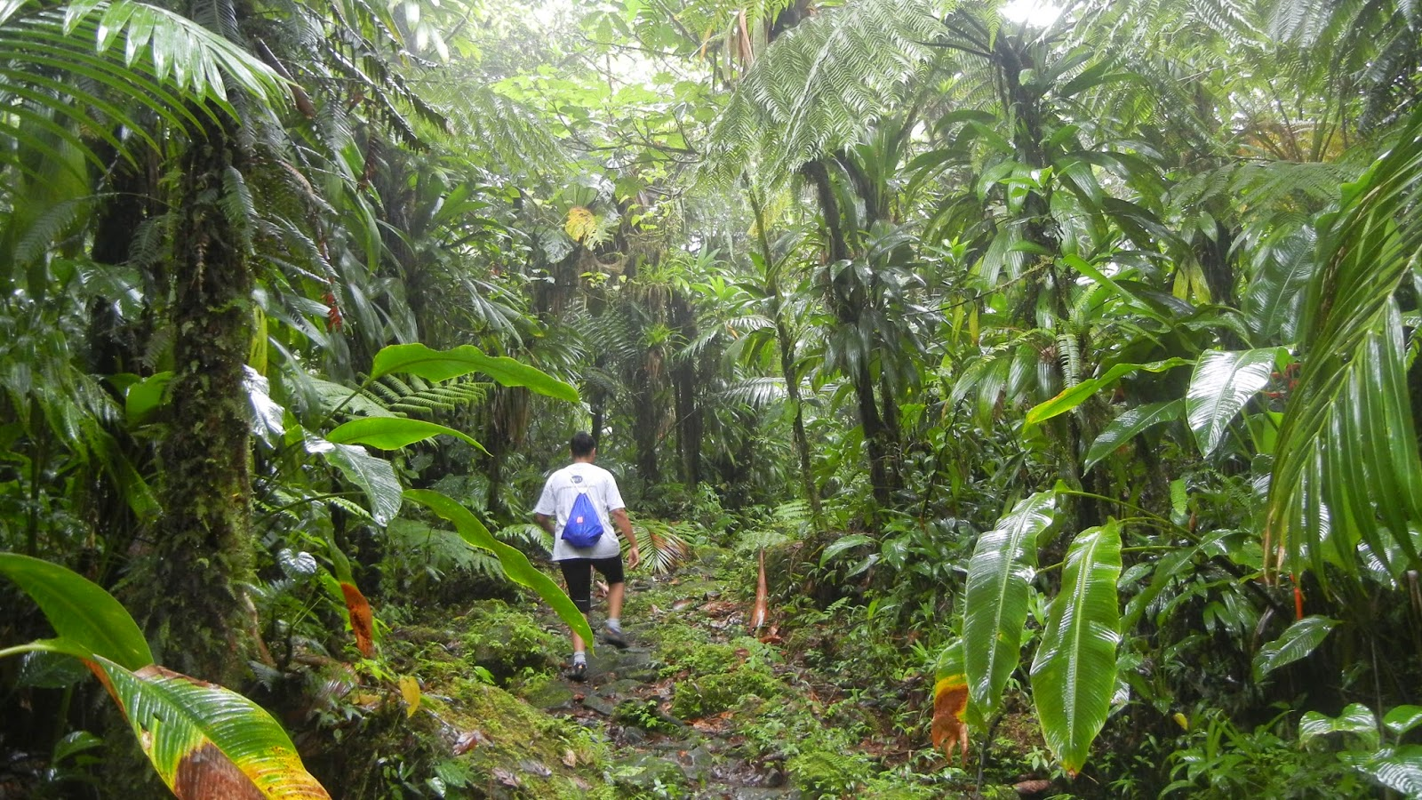 Boeri Lake Trail, Morne Trois Pitons National Park, Dominica