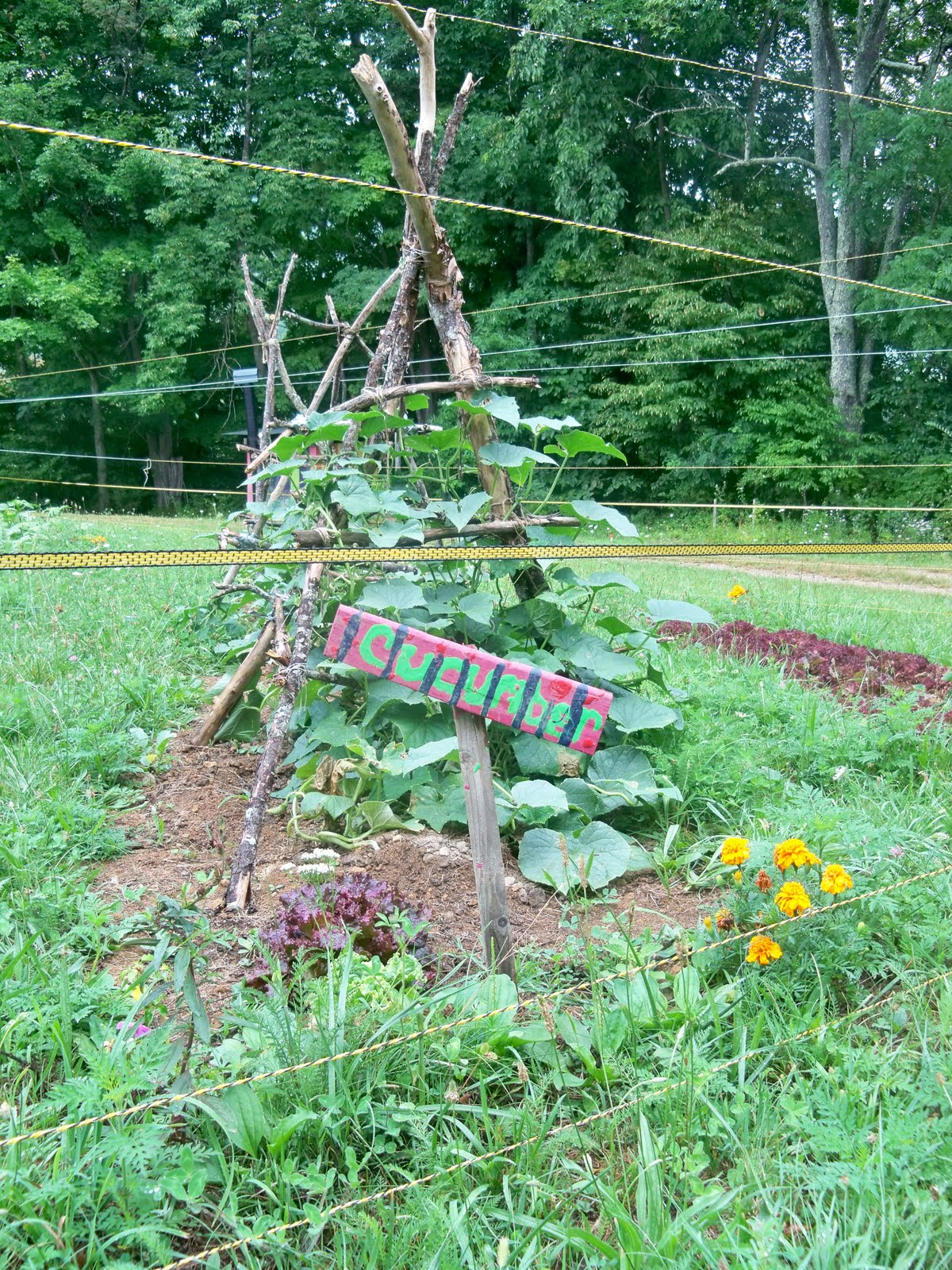 Landscaping Rock Berea Ky : Grow appalachia