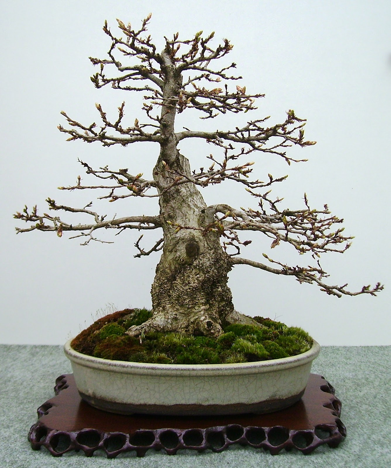 Bespoke Bonsai Stands British Shohin Association Show At Willowbog
