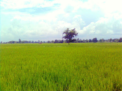Paddy fields and the Sky