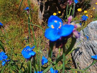 dear miss mermaid flowers at lake hartwell