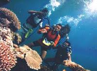 terumbu karang sangat banyak di jumpai