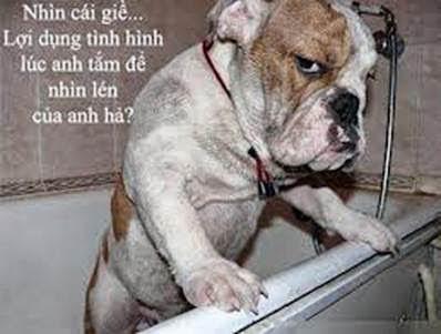 Hình chế chú chó