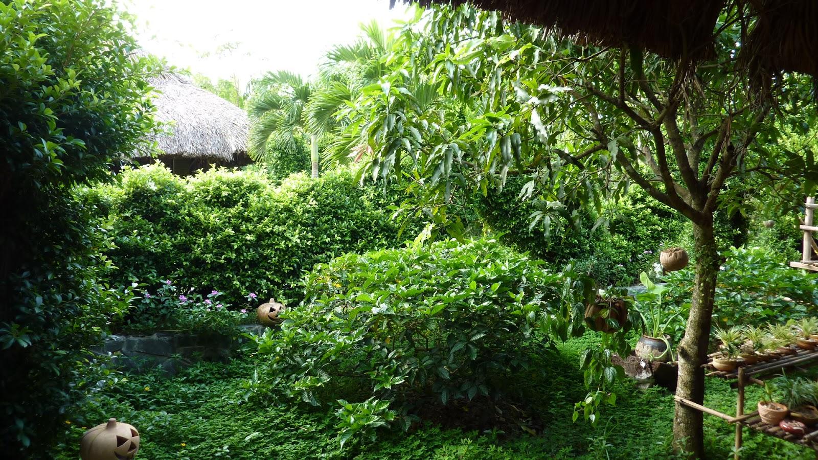 Petunialee garden of eden day 1 for Jardin of eden