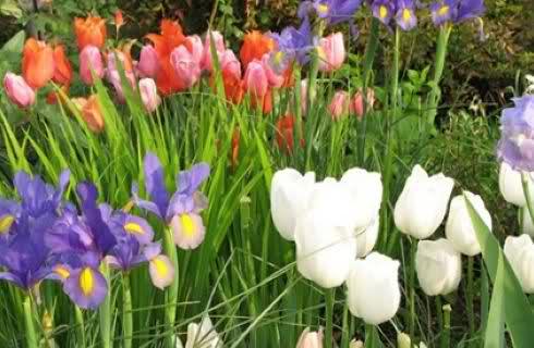 Tra orto e giardino e 39 tempo di piantare i bulbi autunnali - Fiori da giardino autunnali ...