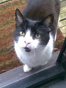 My Furbaby - Miagi!