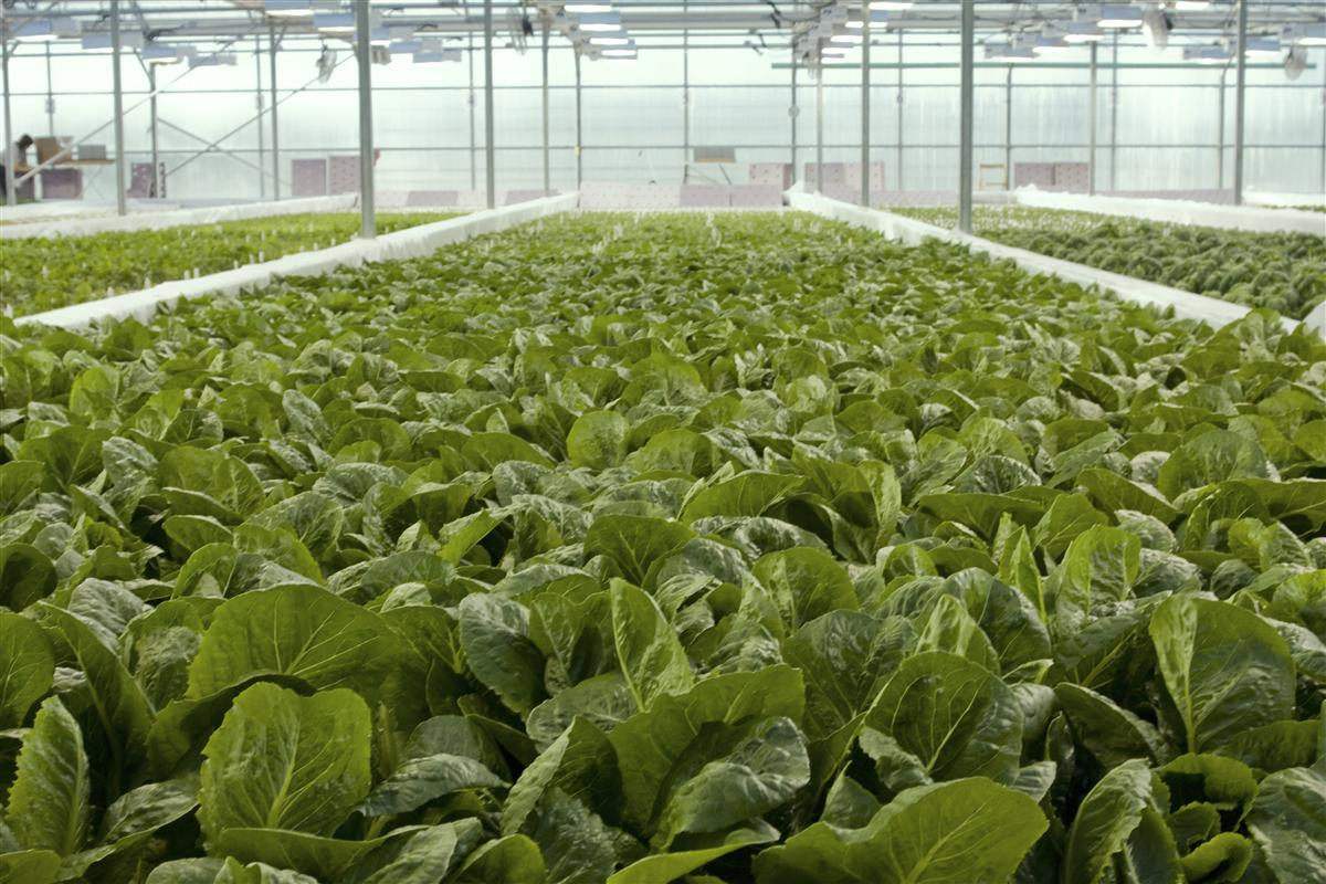aquaponics the future of sustainable chemical free farming