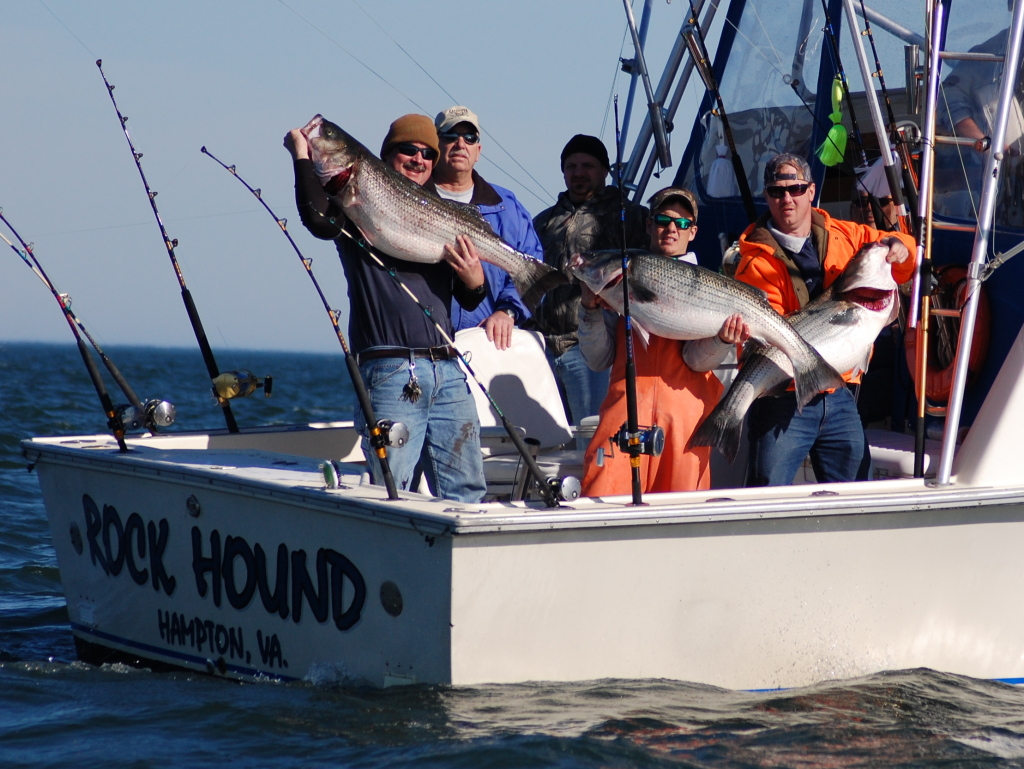 Rock hound charters va beach rock fish charters for Charter fishing virginia beach