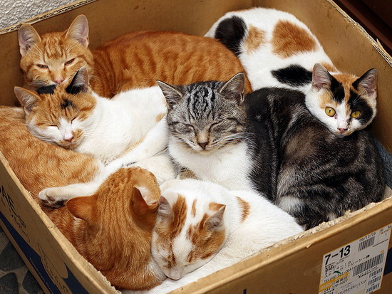 How Many Pet Cats And Dogs In The Usa