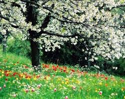 Es Primavera