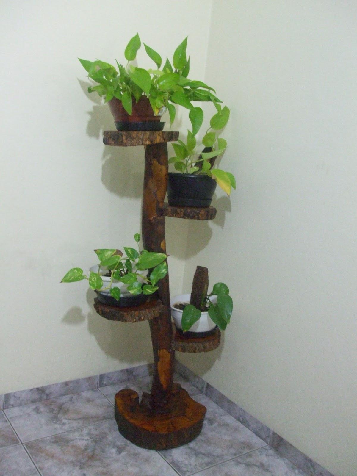 decoracao de sala unica:Esta planta é coringa pois, além de dar um toque de verde e natureza