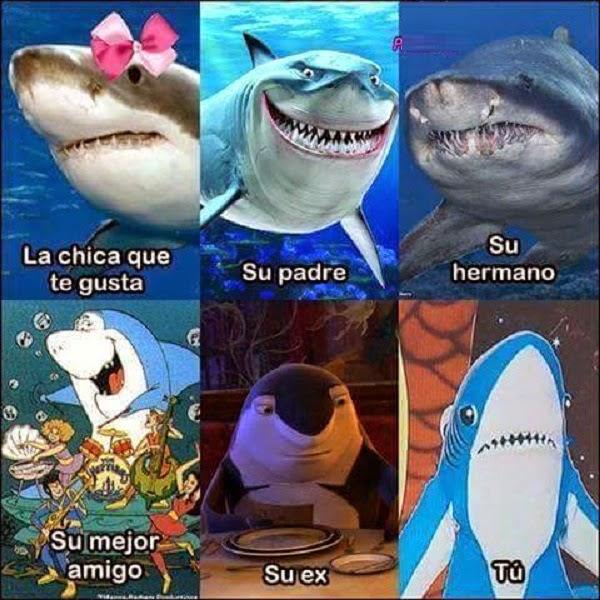 La chica que te gusta versión tiburón