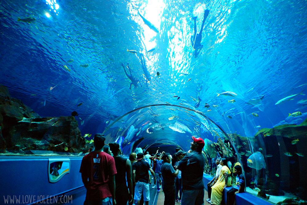 Atlanta georgia aquarium coupons
