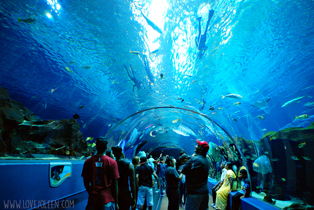 Sometimes the Tennessee Aquarium is called the Chattanooga Aquarium because if its location in downtown Chattanooga TN. The website recommends two hours to visit, but you could easily stay most of the day – in fact, we did.