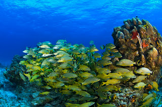 Beautiful Cozumel Images,schooling fish,mexico