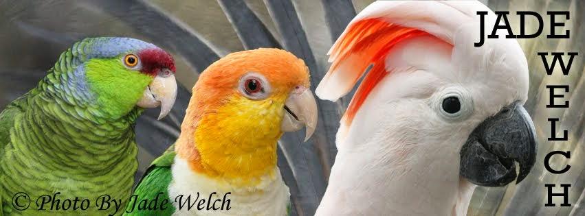 Jade Welch Birds