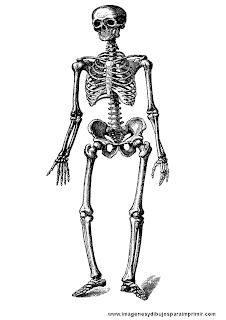 Esqueletos para imprimir