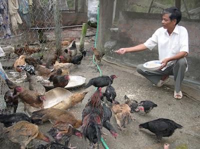 """Nông dân mua thuốc Tây về phục vụ chăn nuôi theo kinh nghiệm  """"truyền miệng"""""""
