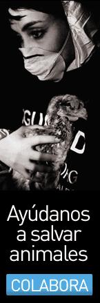 Hazte socio de Igualdad Animal