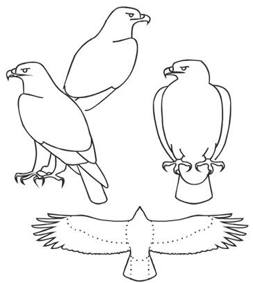 Sketsa Untuk Identifikasi Burung