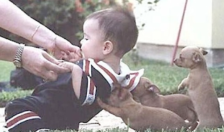 Funny picture: Baby with dogs