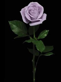 Hoa hồng xanh đẹp nhất, hoa hong xanh