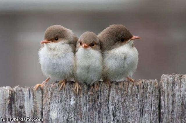 Best Cute Stuff Cute Birds
