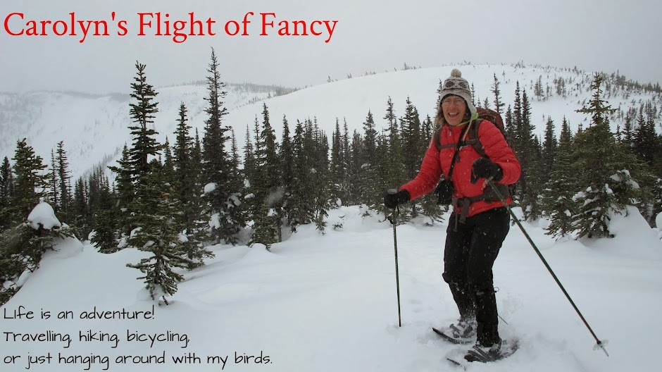 Carolyn's Flight of Fancy