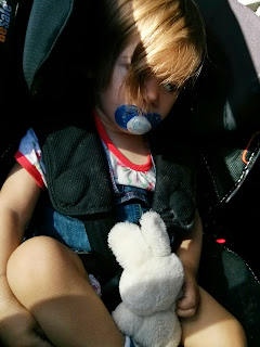 bunny in the car